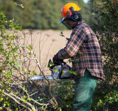 Chainsaw & Arboriculture